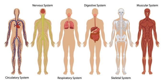 body-sytems