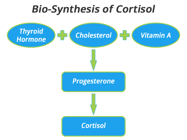 cortisol-synthesis