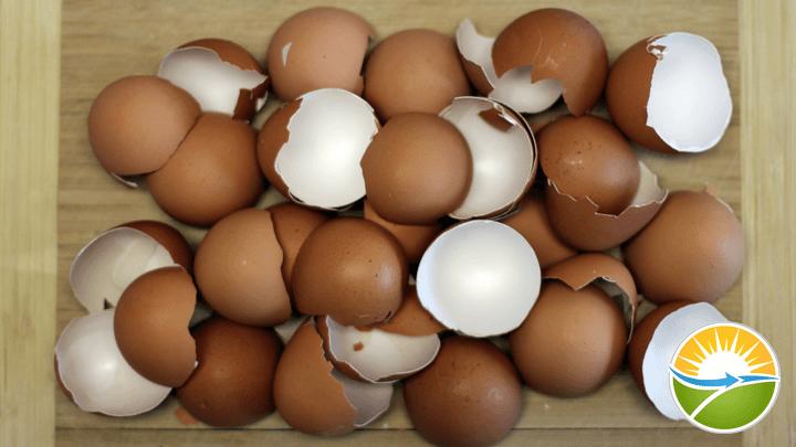 eggshell-calcium-step1