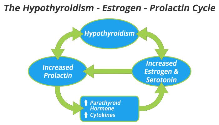 hypothyroidism - estrogen - prolactin cycle