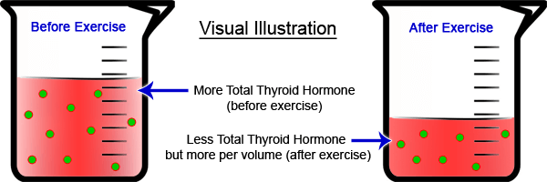 thyroid-exercise-myth-blood-sample